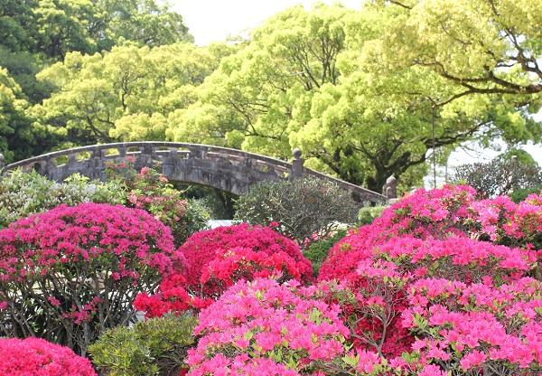 諫早公園、眼鏡橋とツツジの写真