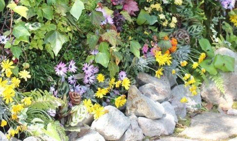 いろんな植物の花壇の写真