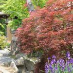 古賀の植木市の庭の写真