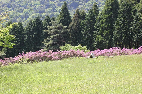 草原と山とミヤマキリシマの写真