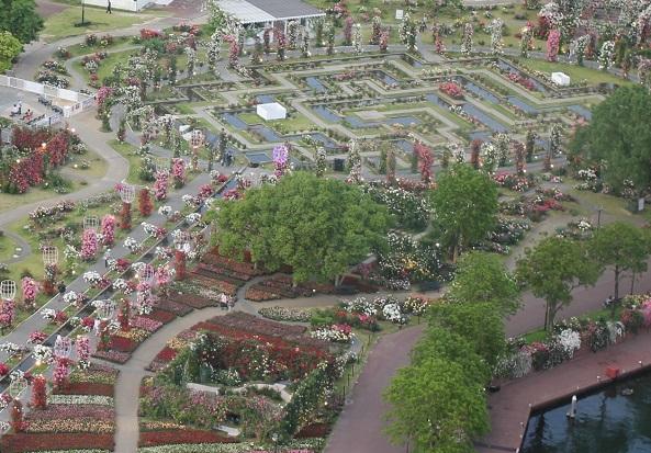 ドムトールンから見たバラ園の写真