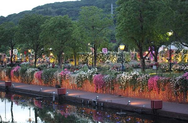 運河のバラ、ライトアップした写真