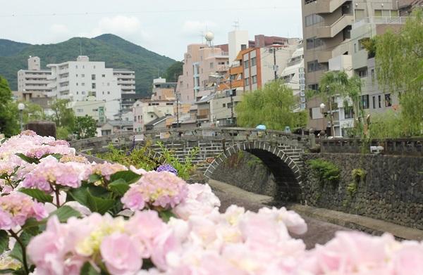 長崎市のアジサイ祭り、中島川公園、眼鏡橋とアジサイの写真