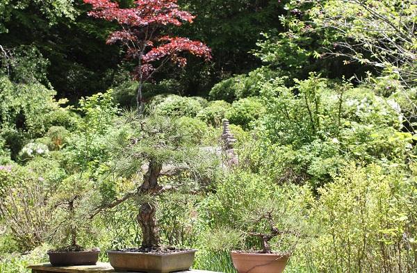 むくの木の庭の写真