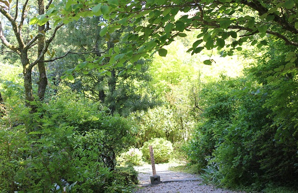 精進料理「むくの木」の入り口の写真