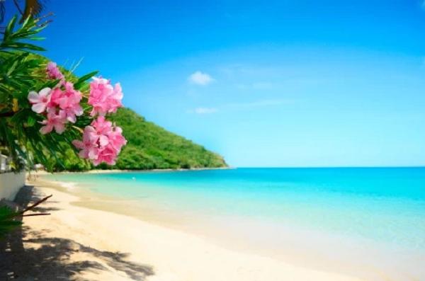 ハワイの風景写真