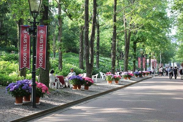 パレスハウステンボスへの並木道、あじさいロードの写真