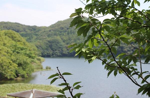 川原大池公園の池とスイレンの写真