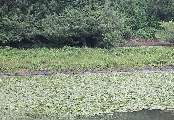 石坂池の写真