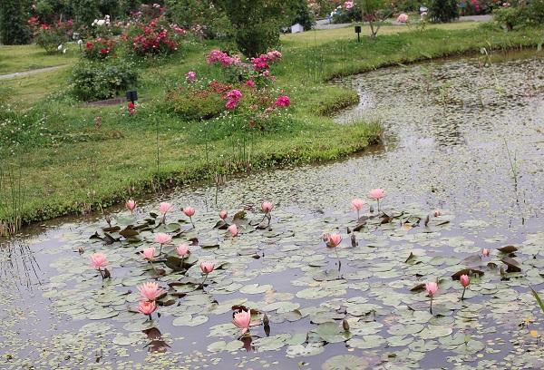ハウステンボスのスイレン池の写真
