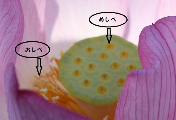 ハスの花の中のアップ写真と説明の画像