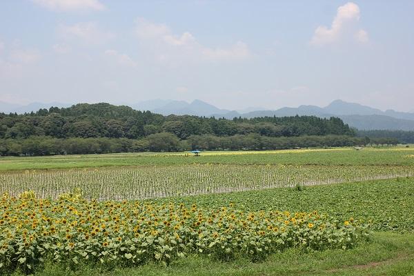 山を背景に畑とヒマワリ畑の写真