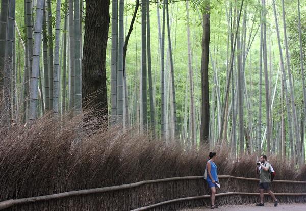 竹林の道と観光客の写真