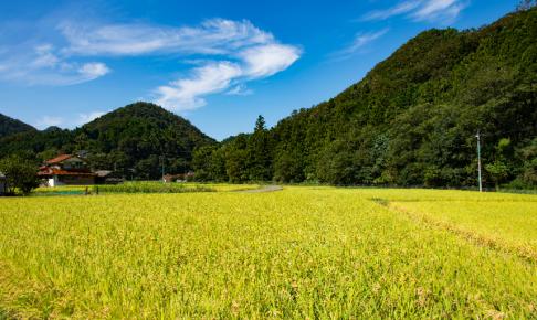 田んぼの風景写真