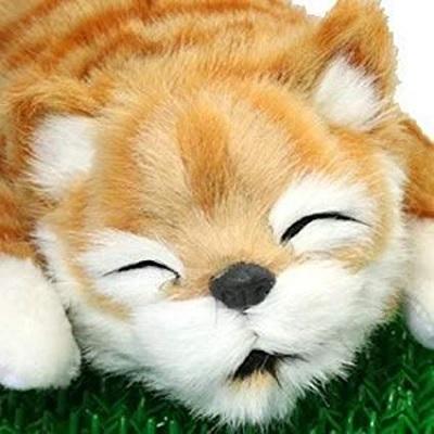 笑い転げる猫の画像