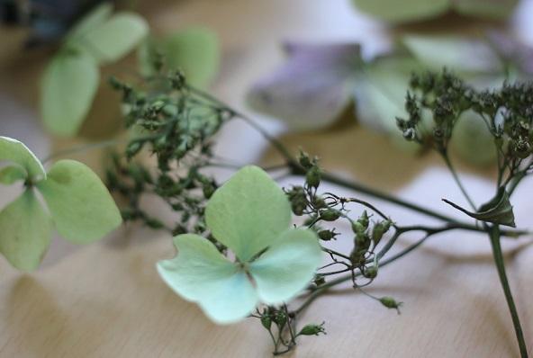 ミントグリーンのドライフラワーになった紫陽花の写真