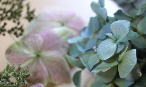 花期が終わったピンクとブルーの紫陽花の写真