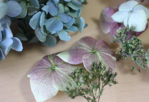 ドライフラワーになった紫陽花と、両性花の写真