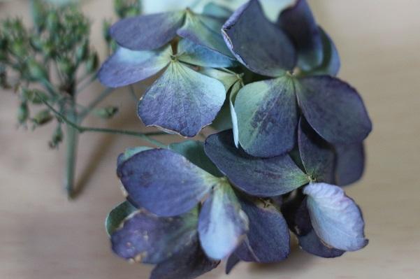 濃い紫のドライフラワーになった紫陽花の写真