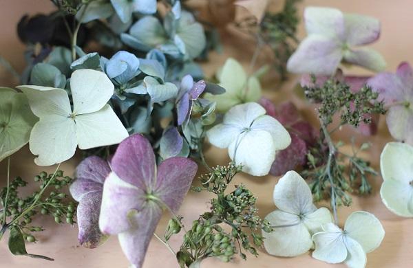 色んな色のドライフラワーになった紫陽花を集めた写真