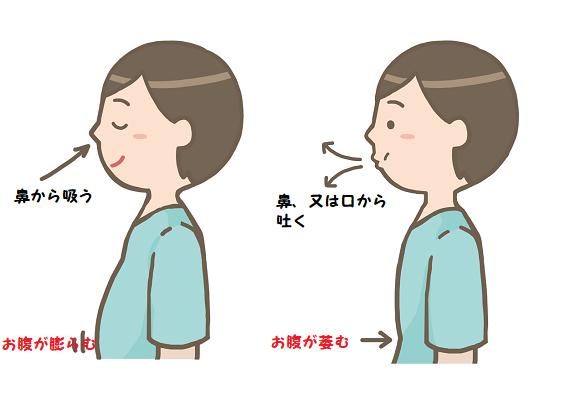 ヨガの複式呼吸のイラスト