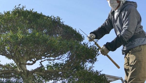 木を剪定している写真