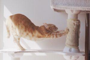 猫が伸びをしている写真