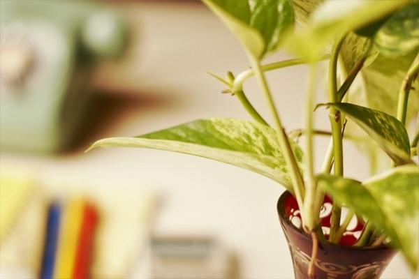 机の上の観葉植物の写真