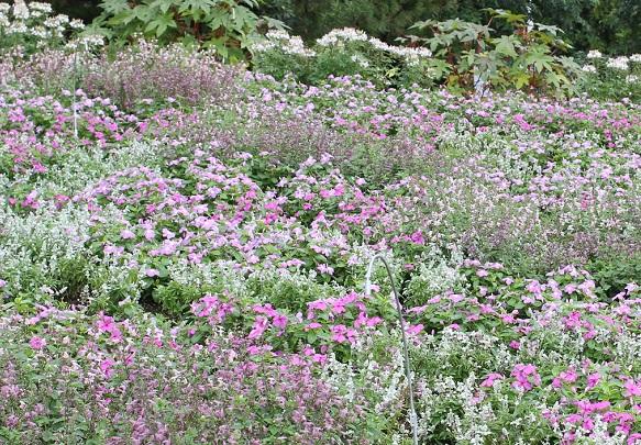 花の谷に咲くピンクの花園の写真