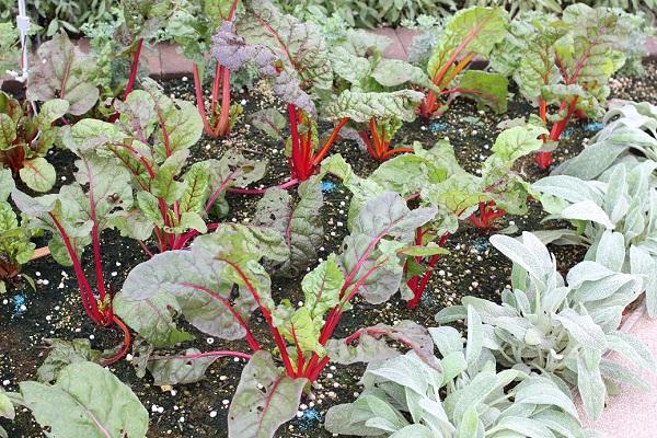 おいしい花園の野菜の写真
