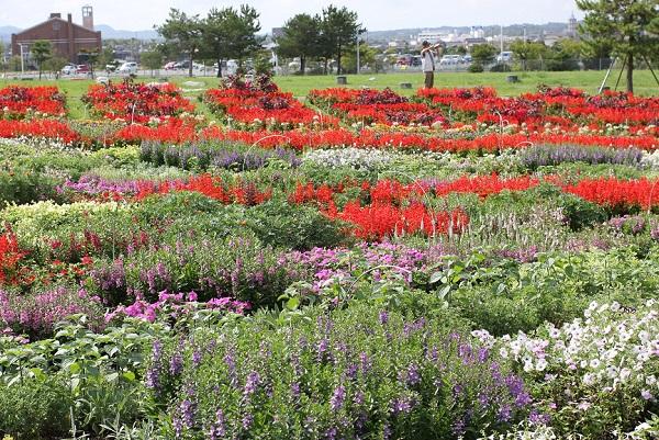 花の谷の花壇と風景写真
