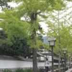 津和野の殿町通りの写真