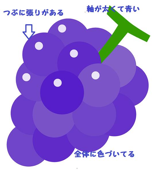 ブドウのイラスト(選び方)