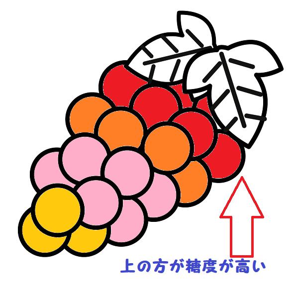 糖度の色を付けたブドウのイラスト