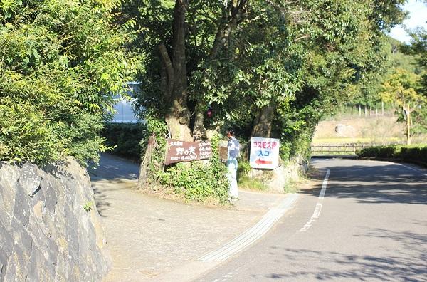 大又農園のコスモス園の入り口の写真