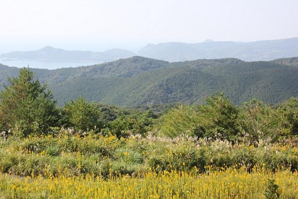 あぐりの丘、山々を背景に彩るススキやセイタカアワダチソウの写真