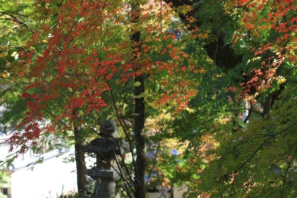 秋月城跡の紅葉の写真