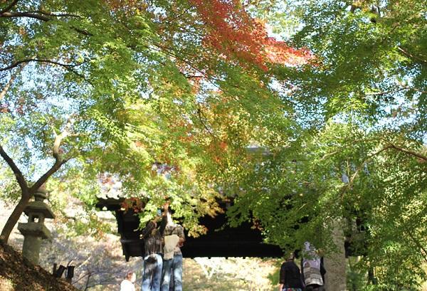 黒門の紅葉の様子の写真