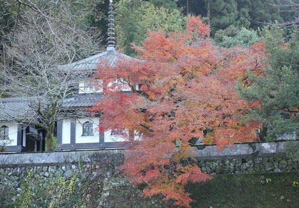西念寺とモミジの写真