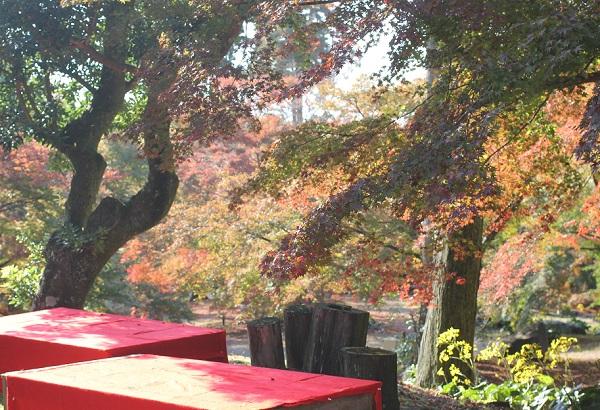 三十路苑の紅葉の庭の写真