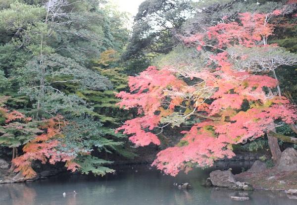 花葉の池と赤い紅葉の木の写真