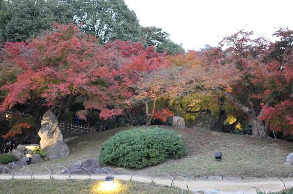 紅葉がきれいな築山の写真