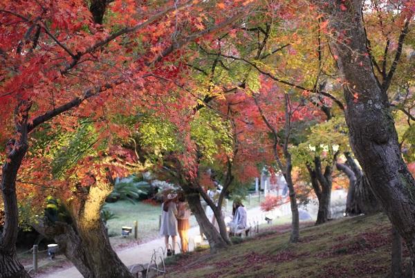 千入の森、たくさんのモミジの紅葉の写真