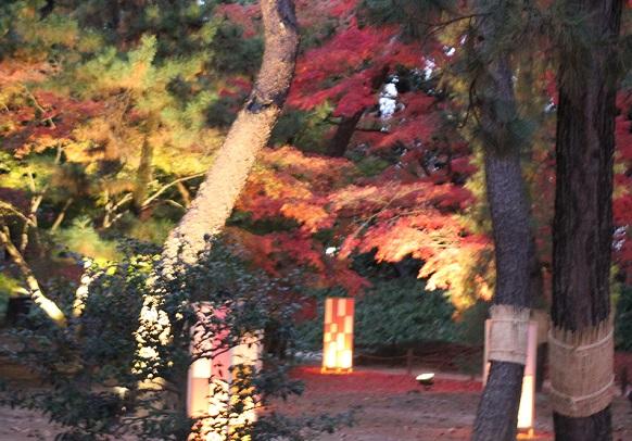 ライトアップされたモミジの彩りが美しい写真