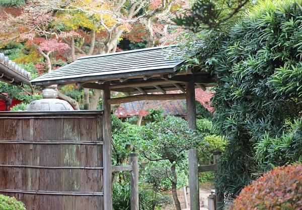 心田庵の入り口とモミジの彩りの写真