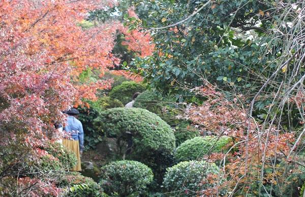 心田庵の庭園の様子