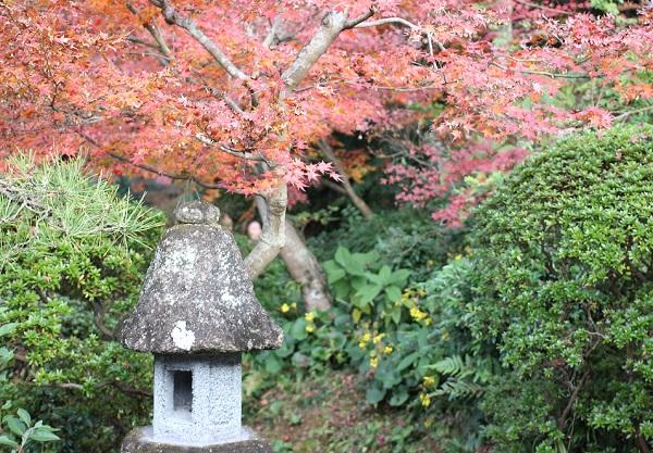 心田庵の日本庭園の様子の写真