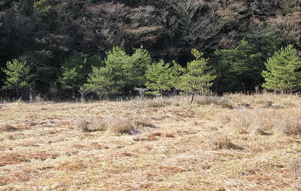 原生沼の写真
