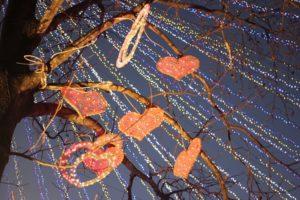 冬のハウステンボスのツリーとイルミネーションの写真