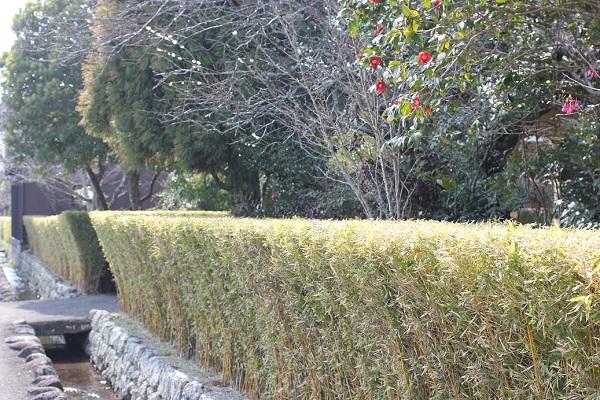 神代小路地区、生垣と水路の写真